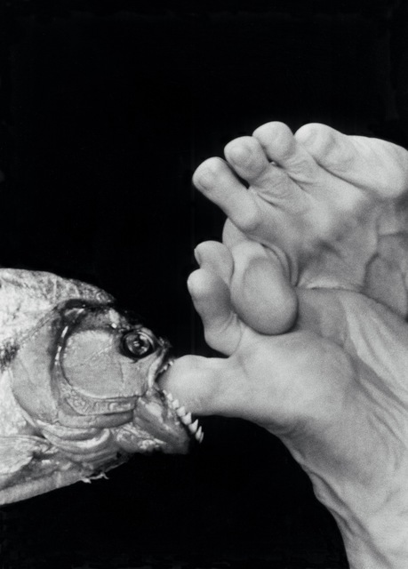 Linda Lieberman, 'Ouch', 2006, Photography, Silver Gelitine Print, Siger Gallery