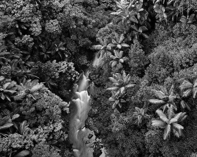 , 'Rainforest, Hawaii,' 1989, Gallery 270