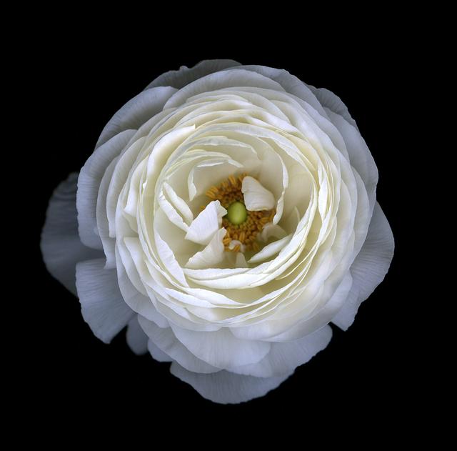 Katinka matson white flowers eric buterbaugh gallery artsy katinka matson white flowers mightylinksfo