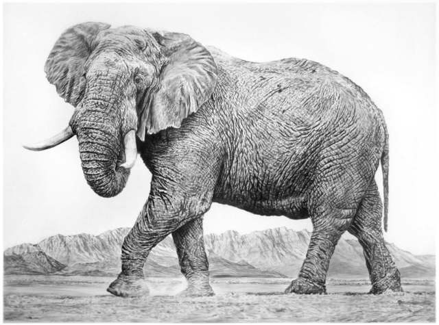 , 'Elephant II,' 2016, Sears-Peyton Gallery