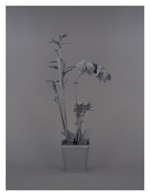 , 'Neutral Orchids (Phalaenopsis + Dracaena sanderana 2),' 2016, Catharine Clark Gallery