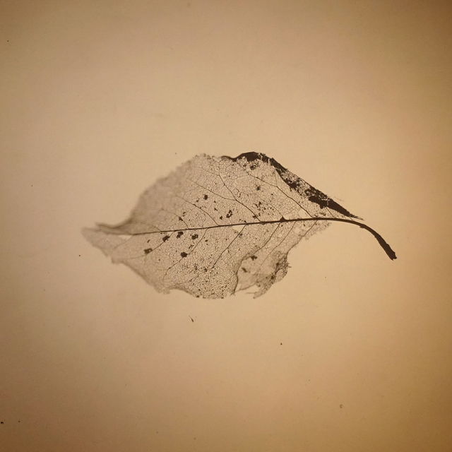 , 'Elm Leaf,' 2018, Open Mind Art Space
