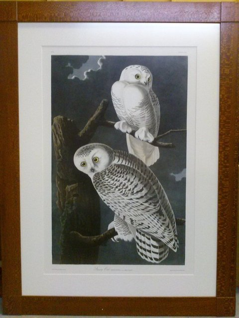 "John James Audubon, 'John James Audubon ""Snowy Owl"" rare nocturnal print Oppenheimer Edition', Lions Gallery"
