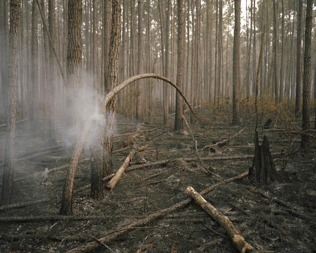 , 'Burning Bough,' , Cross Mackenzie Gallery