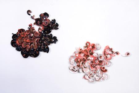 Ivana Brenner, 'Sin Titulo (Diptic)', 2008, TAG ARTS
