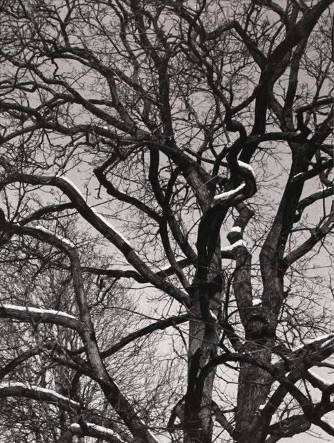 , 'Trees #1,' 2014, Mira Godard Gallery