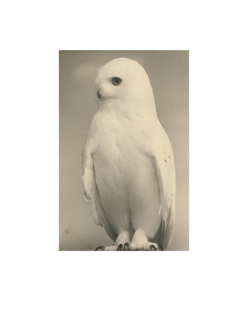 , 'Birds Collotype portfolio,' 2019, Benrido