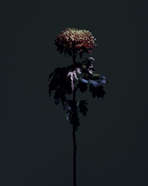 , 'fig. XXI,' 2017, Galerie SOON
