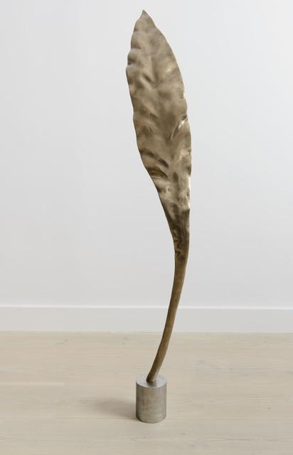 Shan Hur, 'Tree #4 (Pacho)', 2013, Gazelli Art House