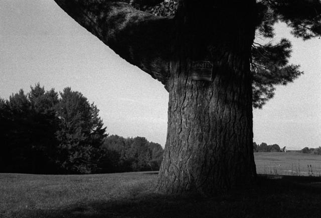 , 'Blacks Tree,' 2004, Dedee Shattuck Gallery