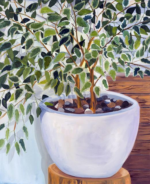 , 'Ficus,' 2018, Tappan