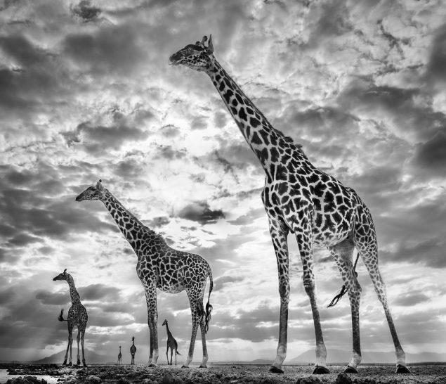David Yarrow, 'Keeping Up With The Crouch's', 2019, Art Angels