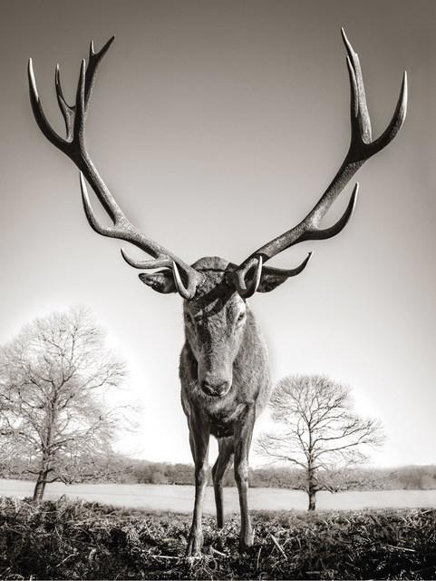 Graeme Purdy, 'Mega Stag', 2019, Woolff Gallery