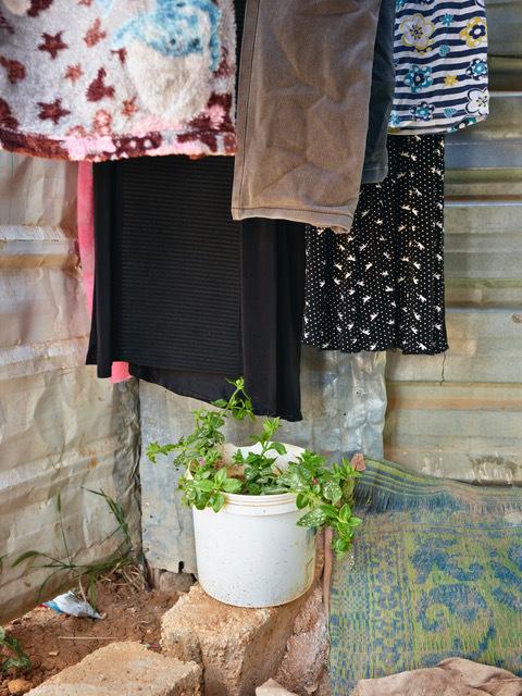 , 'Ice Plant, Zaatari, Jordan,' 2018, Galerie Bart