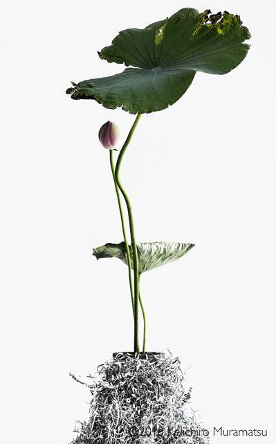 , 'Lotus 18,' 2018, Galerie Marie-Robin