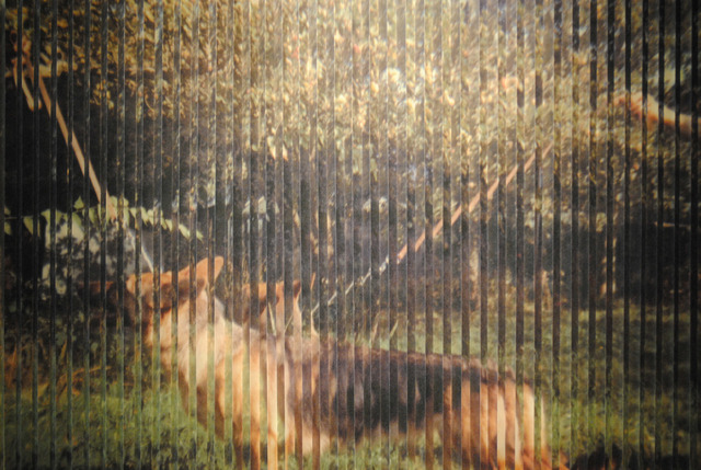 , 'Depictions of a Dog,' 2014, Jill George Gallery
