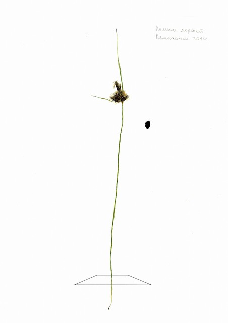 , 'From the Herbarium series ,' 2015, H.L.A.M.