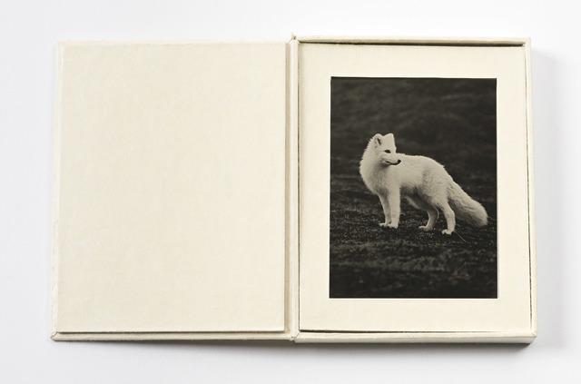, 'Arctic Fox,' 2012-2016, EUQINOM Gallery