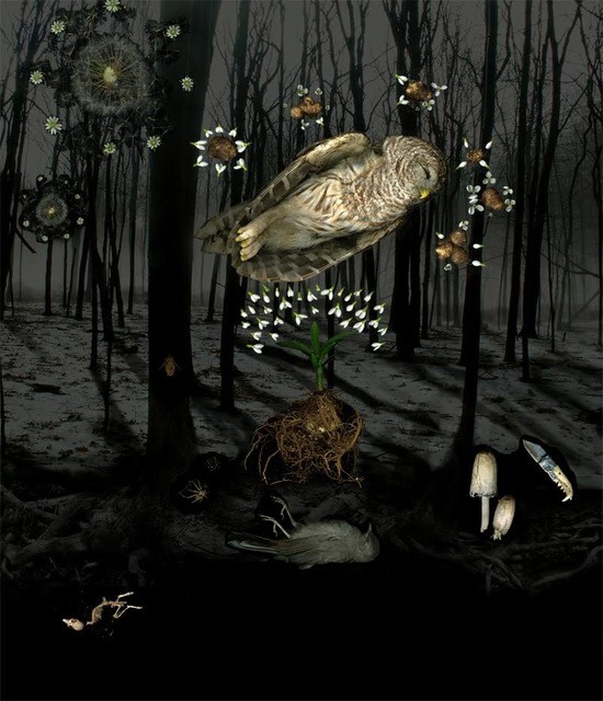 Portia Munson, 'Into the Woods', 2008, Cross Contemporary Art