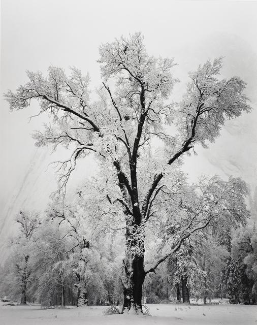 , 'Oak Tree, Snow Storm, Yosemite,' 1948, The Ansel Adams Gallery