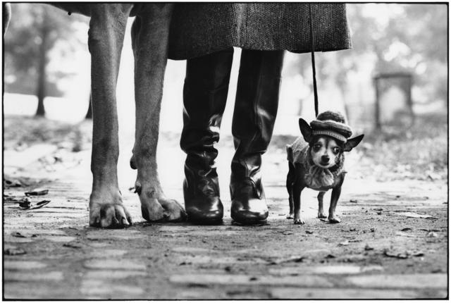 Elliott Erwitt, 'New York City, 1974 (dog legs)', 1974, Holden Luntz Gallery