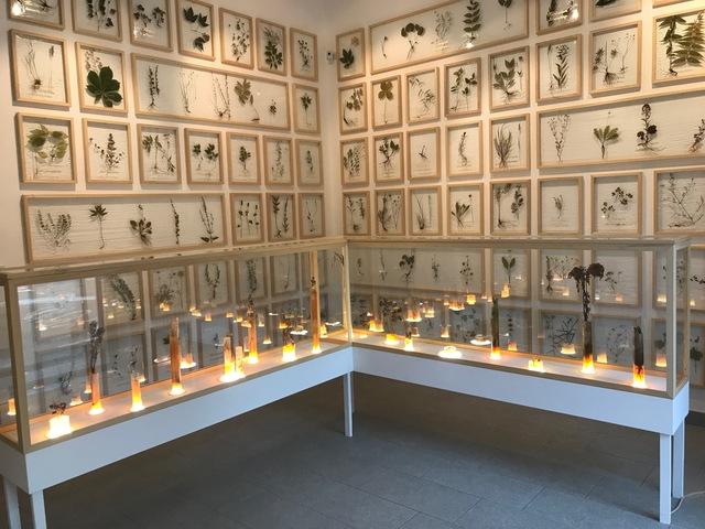 , 'HERBARIUM, AURI SACRA FAMES - Installation,' 2017, Galleria Punto Sull'Arte