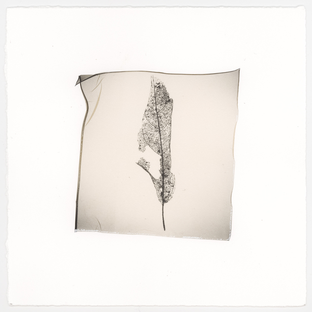 Vanessa Cowling, 'Leaf (Veins)', 2019, Barnard