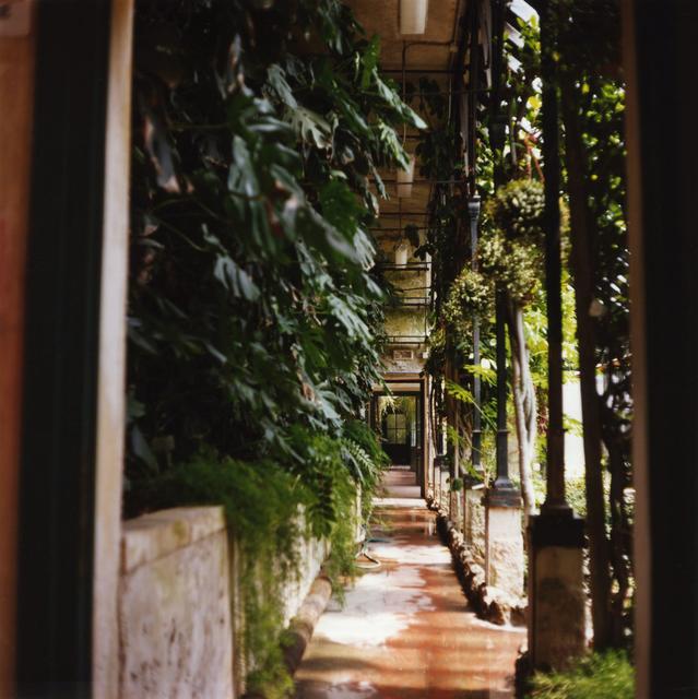 , 'Padua Botanical #9,' 2013, Newzones