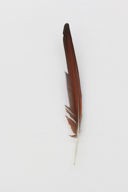 , 'untitled (feather, p),' 2016, Galerie Rüdiger Schöttle