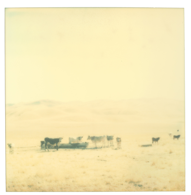 Stefanie Schneider, 'Untitled', 2004, Photography, Analog C-Print, hand-printed by the artist in her own color lab in Berlin, based on an expired Polaroid, Instantdreams