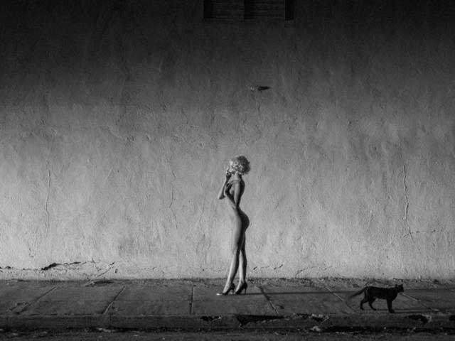 , 'Black Cat,' , Miller Gallery