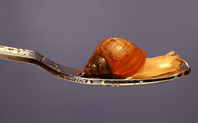 , 'Nothing.Life.Object (Snail on Spoon),' 2015, Plus One Gallery