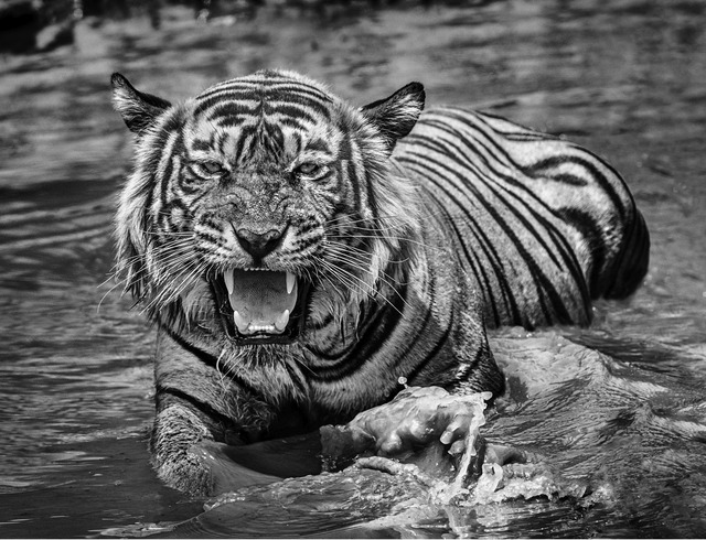 David Yarrow, 'Risky business', 2018, Fineart Oslo