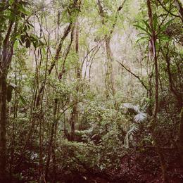Mona Kuhn, 'Araponga Jungle', 2009, Jackson Fine Art