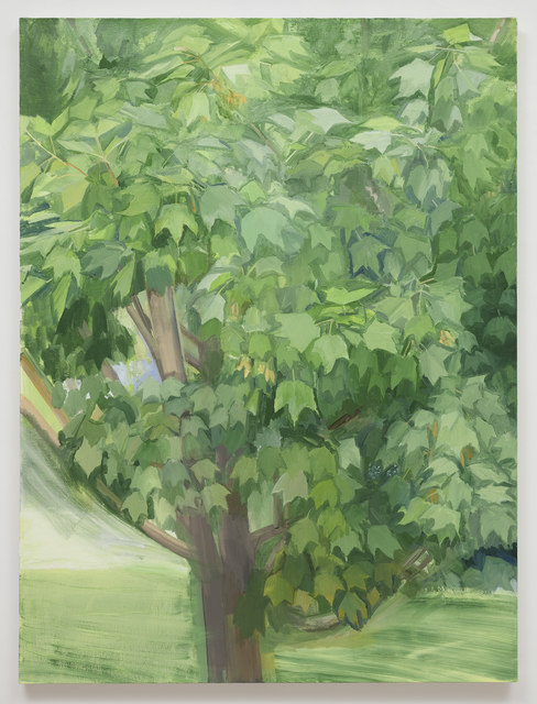 Sylvia Plimack Mangold, 'Summer Maple 2013', 2013, Alexander and Bonin