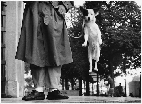 , 'Paris, France (Dog jumping),' 1989, Lumiere Brothers Gallery