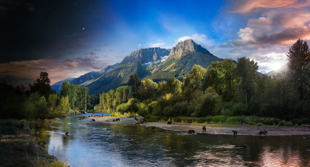Stephen Wilkes, 'Day to Night, Grizzly Bears, Bella Coola, British Columbia,', 2018, Photography, Archival C-Print, Bryce Wolkowitz Gallery