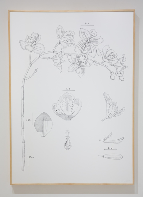 , 'PIT#9 DENDROBIUM (ORCHID),' 2013, Chan + Hori Contemporary