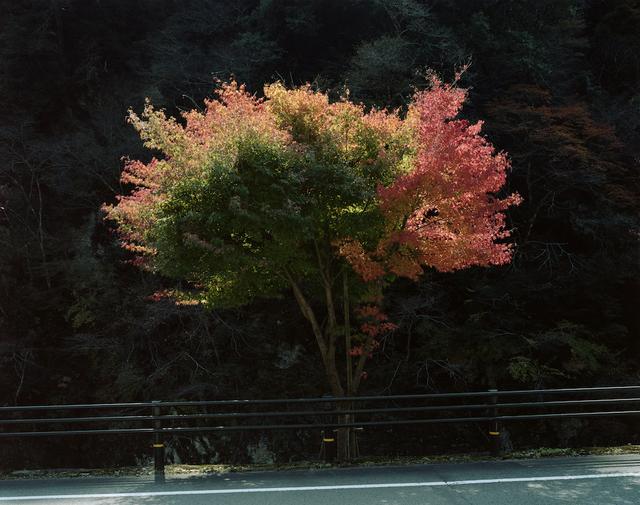 Toshio Shibata, 'Kumakogen Town, Ehime Prefecture (C-2540)', 2014, Gallery Luisotti