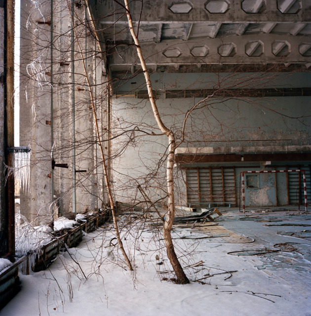 , 'Birch Tree, Chernobyl,' 2010, ILEX Gallery