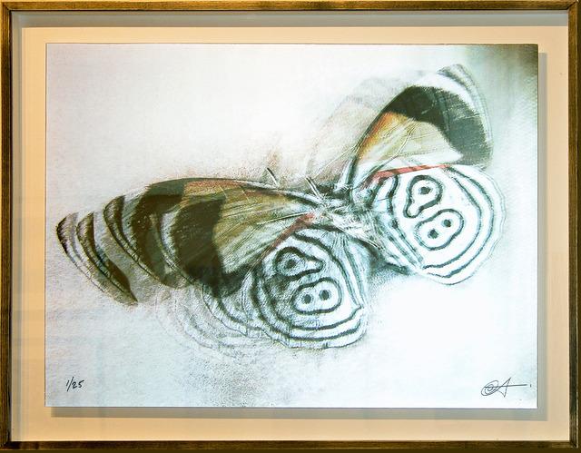 , 'La Mariposa,' 2005, Turner Carroll Gallery