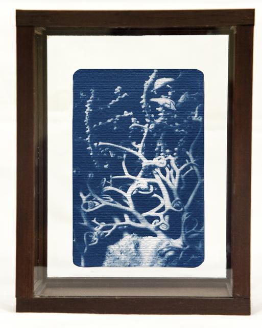 , 'Algae,' , Soho Photo Gallery