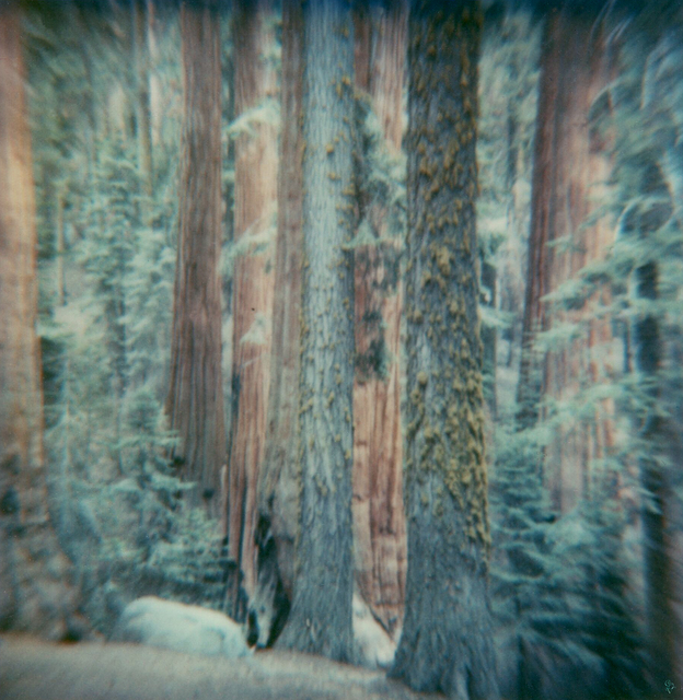 Carmen de Vos, 'Sequoia #125 - from the series US Road trip Diary ', 2007, Photography, Archival pigment print on canvas, photo based on an expired Polaroid, Instantdreams