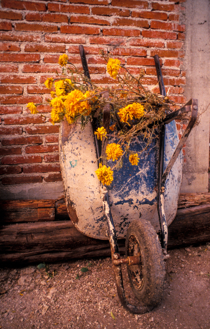 , 'Yellow Flowers and Wheelbarrow, Mexico,' , Soho Photo Gallery