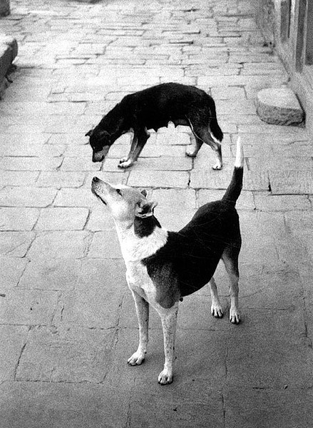 , 'Swayambhunath, Nepal (Two Dogs Forming a Circle),' 1994, photo-eye Gallery