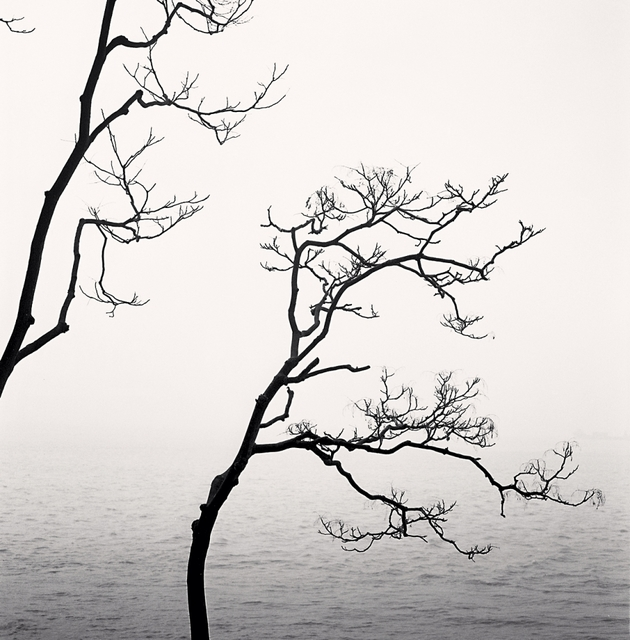 , 'Alianthus Tree and Yangze River, Study 1, Nantong, Jiangsu, China,' 2015, A Gallery for Fine Photography