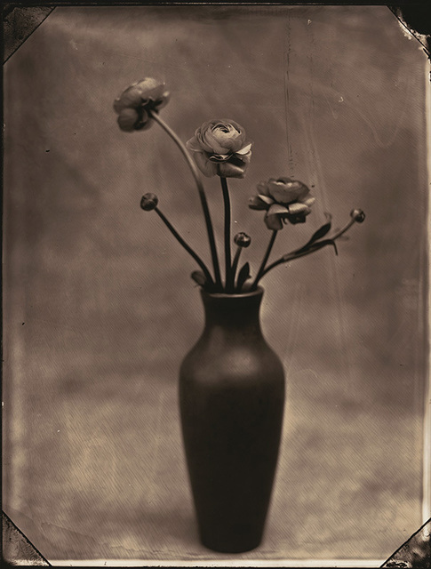 Tom Baril, 'Ranunculus', 2002, Catherine Couturier Gallery