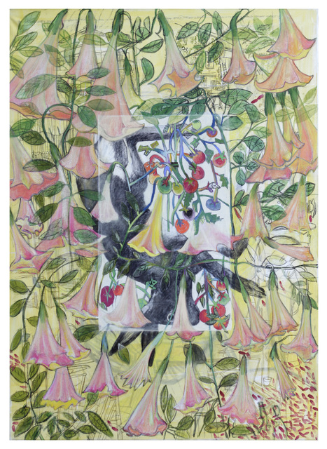 , 'From Picasso's planter (Brugmansia),' 2018, Drina Gallery