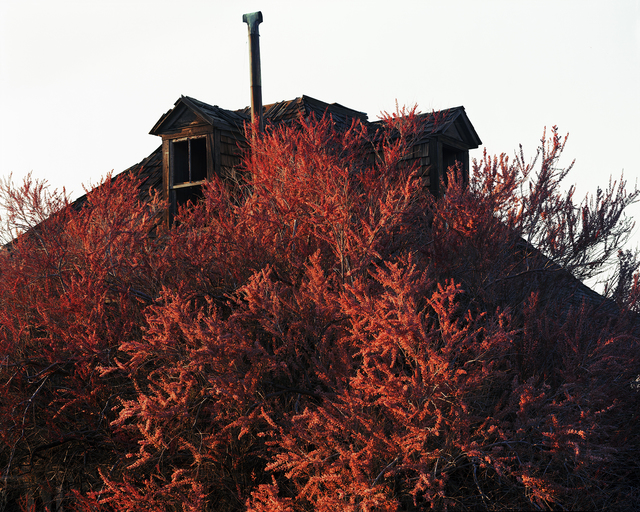 , 'Blooming Tamarisk (in the town where my great-grandmother died), Goldfield, Nevada, 2015 1/5,' , Gail Severn Gallery