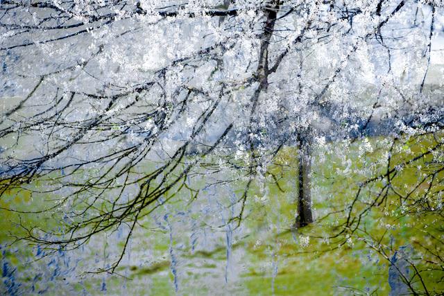 Valda Bailey, 'Blossom Blizzard', 2012-2019, Sohn Fine Art